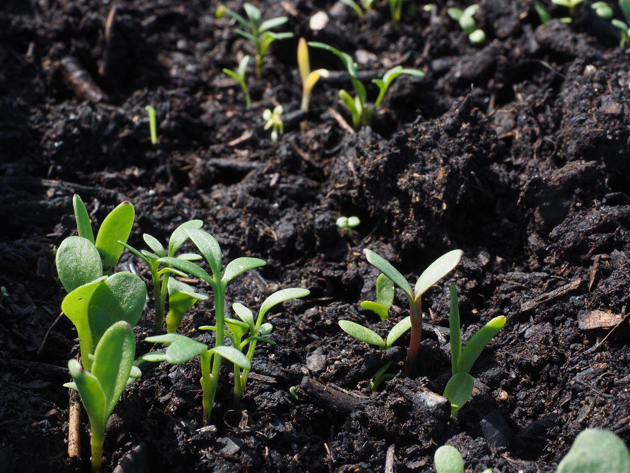 化肥也有不合格 农作物品质该如何保障?